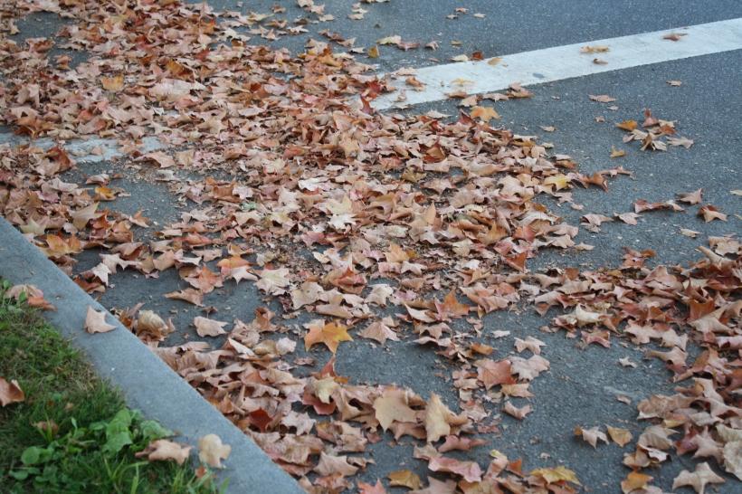 malgré les 28° de ce jour-là, l'automne a bien commencé ici.